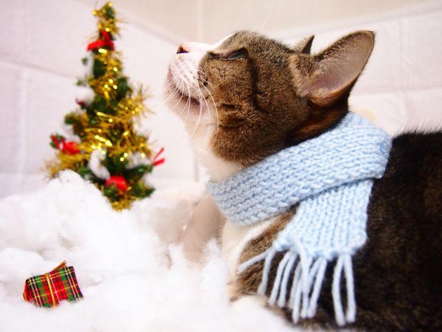 クリスマスと猫