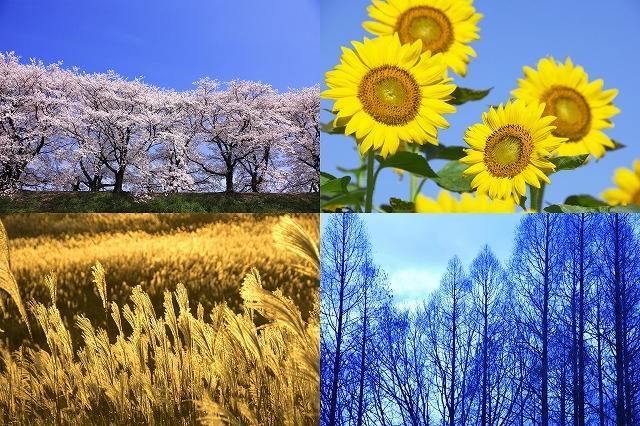 節約しながら日本の四季を楽しむ! | タイナビスイッチ