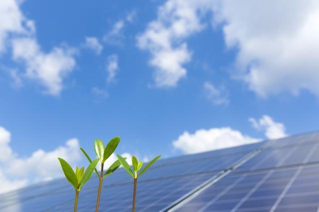 マングローブの新芽と太陽光パネル