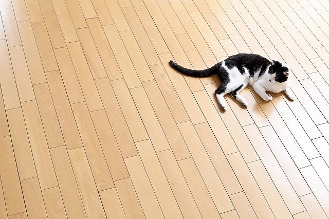 """""""床暖房で温まる猫"""""""