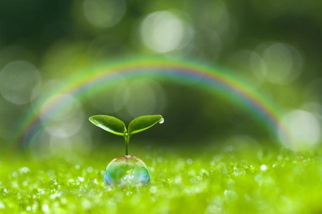 木の芽と虹